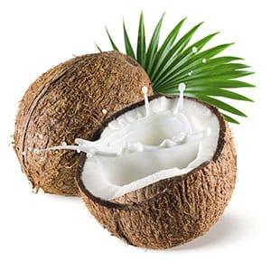 Coconut-small